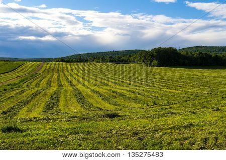 freshly cut hay field drying landscape quebec canada