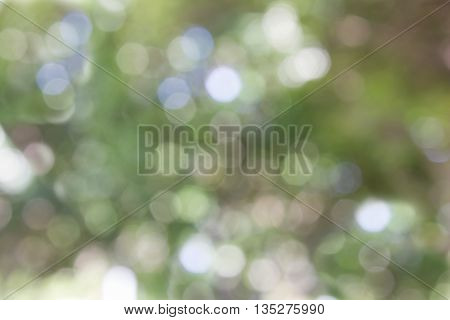 Colourful Pastel Green Blue And Soft Yellow Spark And Blow Bokeh Fancy Sweet Romantic Background