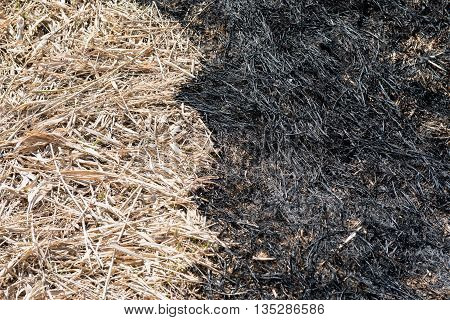 The boundary between the burnt and dry grass