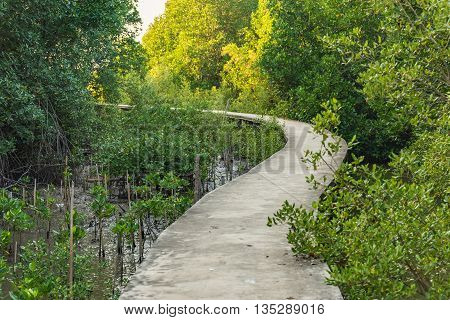 Walkway along mangrove forest in Thailand. Selective Focus. Suitable for use as wallpapers.