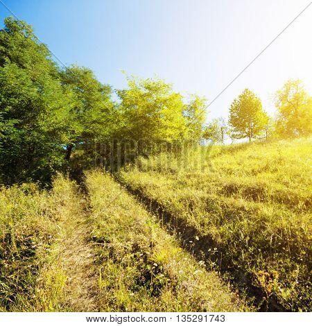 Sunshine over a hill in summer