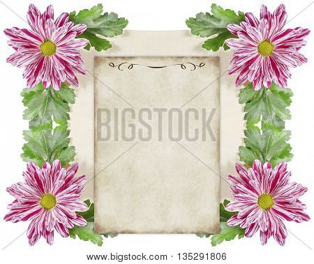 Decorative Composition of Chrysanthemum Flowers and Old Paper.