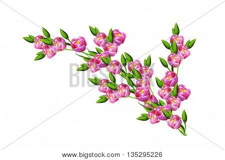 spring flowers tulips isolated on white background. beautiful flowers