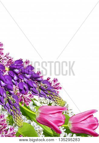 spring flowers lilac isolated on white background. beautiful flowers