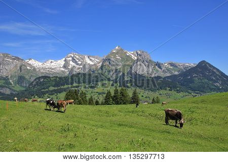 Spring scene in the Toggenburg valley Switzerland.