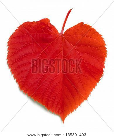 Red Leaf On White