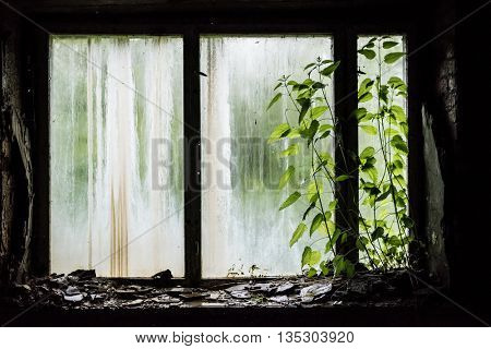 window with debris in abandoned school in Pripyat, Chernobyl, Ukraine