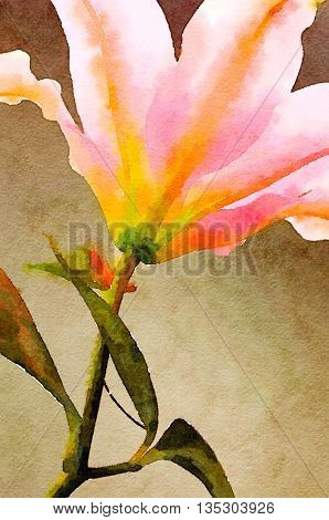 Very Nice painting of a Pink Lilly