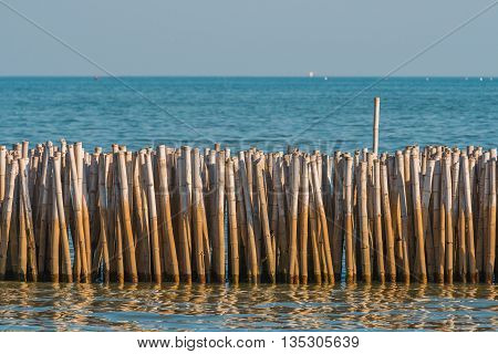 Bamboo barrier for protect from erosion in Gulf of Thailand. Selective Focus. Nature Background. Suitable for use as wallpapers.