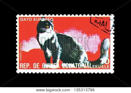 EQUATORIAL GUINEA - CIRCA  1974 : Cancelled postage stamp printed by Equatorial Guinea, that shows European cat.