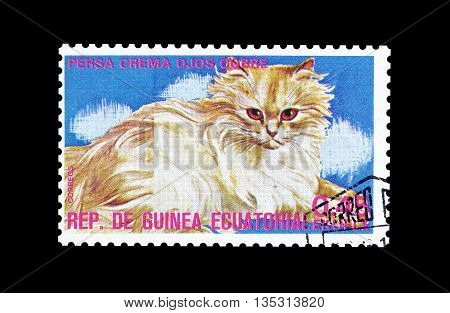 EQUATORIAL GUINEA - CIRCA  1974 : Cancelled postage stamp printed by Equatorial Guinea, that shows Persian creme cat.