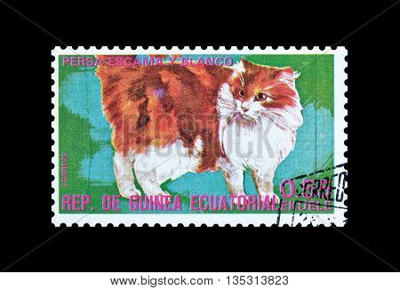 EQUATORIAL GUINEA - CIRCA  1974 : Cancelled postage stamp printed by Equatorial Guinea, that shows Persian flake cat.