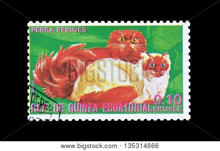 EQUATORIAL GUINEA - CIRCA  1974 : Cancelled postage stamp printed by Equatorial Guinea, that shows Persian cats.