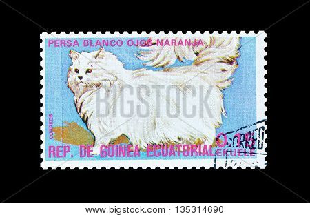 EQUATORIAL GUINEA - CIRCA  1974 : Cancelled postage stamp printed by Equatorial Guinea, that shows Persian white cat.