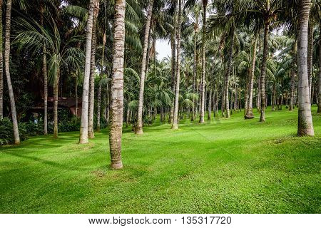 Palm forest with green grass on Tenerife island, Spain