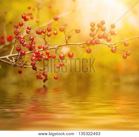 Hawthorn red berries in nature, autumn seasonal vintage sunny background with water reflection
