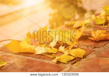 Autumn maple leaf lying on the tile, seasonal fall natural sunny background