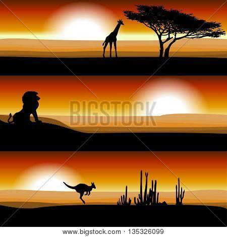 Animals on the savannah at sunset. Giraffe, lion, kangaroo