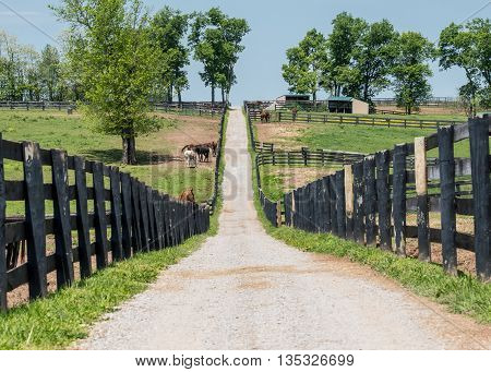 The Path to the Back of the Farm through rickety black fences
