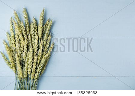 Bouquet of green wheat ears on bright blue wooden backdrop rustic harvest background copy space