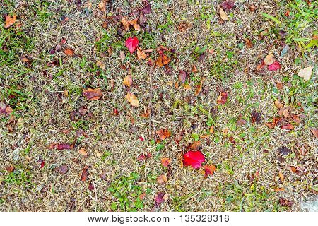 Dry leaves on the ground of dried grass