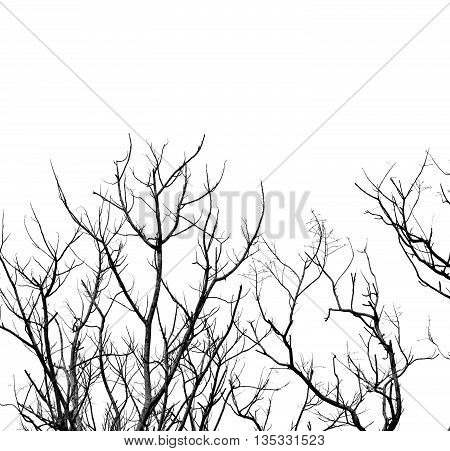 branches in high contrast on white background.