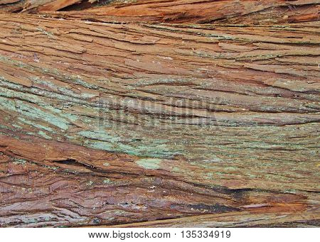 colorful bark textures on a Cedar tree