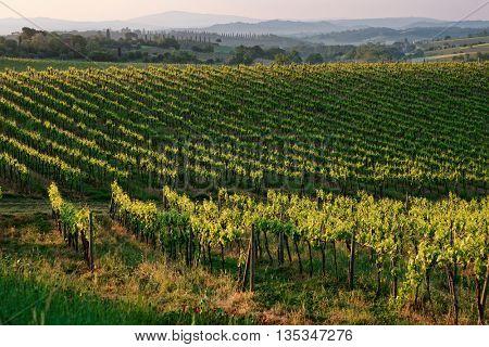 Tuscan vineyard at sunrise, national landmark