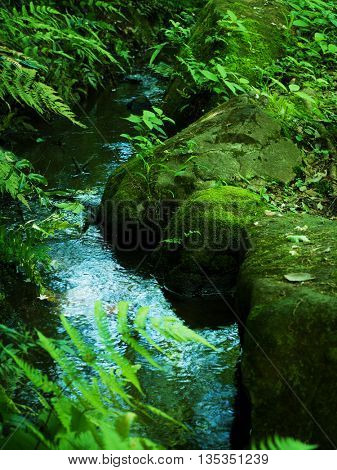 Mossy stones and green plants growing around a Japanese style garden pond or stream.