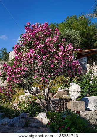 Greek Head Statue In Bodrum
