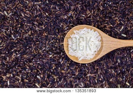 Rice Grain