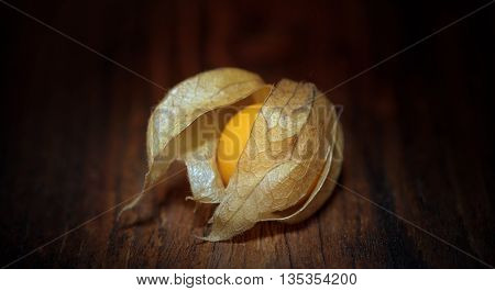physalis a fruit that barely visible. perfect image that puts out. purity
