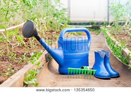 The blue plastic watering can, rubber boots and rake on the background of a greenhouse with tomatoes. Bright equipment for garden care.