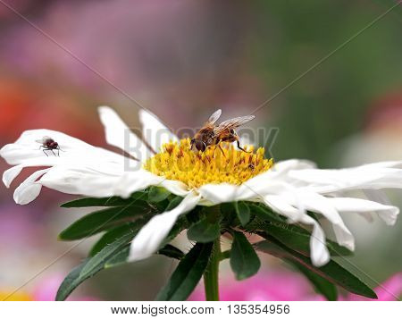 a stunning picture with a flower and an insect that eats nectar