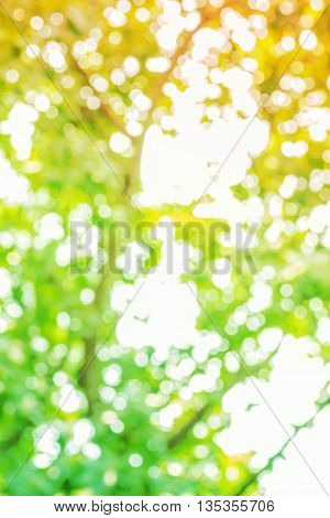 blur of light that shines through the leaves.