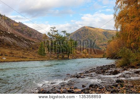 landscape with the mountain river in autumn
