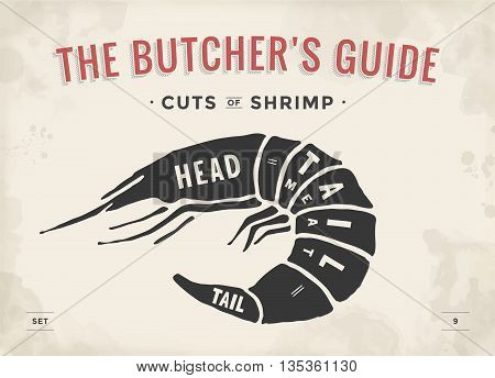 Cut of meat set. Poster Butcher diagram and scheme - Shrimp. Vintage typographic hand-drawn visual guide for butcher shop. Vector illustration