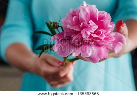 Woman Holding Beautiful Pink Peonies. Girl With Bouquet Of Flowers In Her Hands. Closeup Of Hands Ho