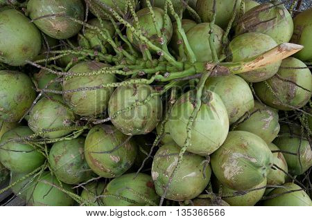 Fruit; Group of raw green coconut in market