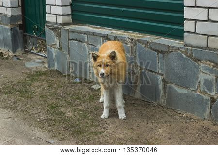 Lonely homeless dog standing on the sidewalk