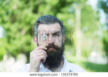 handsome young man with long beard and moustache on serious face holding white fluffy dandelion on natural background in studio