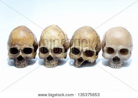 Human skull isolated on white background. skull