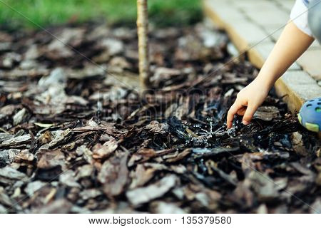 Home irrigation system for trees spray wet