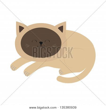 Lying sleeping siamese cat in flat design style. Cute cartoon character. Happy kitten with blue eyes. White background. Isolated. Vector illustration