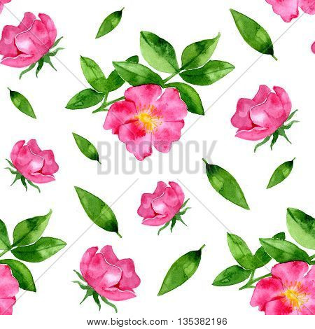 Watercolor floral rosehip seamless pattern on white background