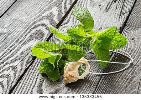 Medicinal plant: mint (Mentha spicata). Mint essential oil in aromatic pendant fresh mint on a dark wooden table. Used in aromatherapy phytotherapy SPA healthy and vegetarian food