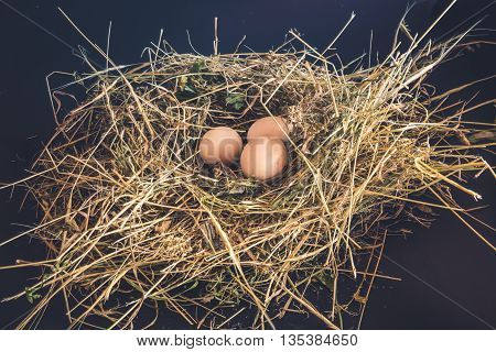 Domestic fresh eggs in the nest of dry grass