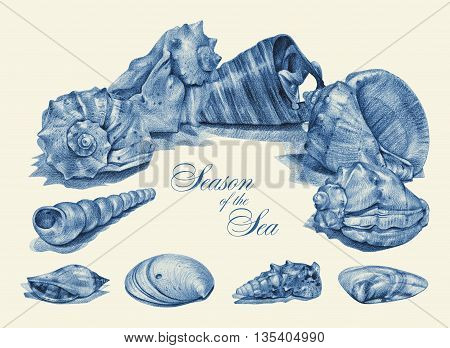 Frame with different seashells drawn by hand with pencil. Pencil sketch academic drawing. Place for text. Summer sea theme