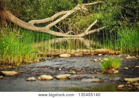 View on river in a forest. Landscape in forest.
