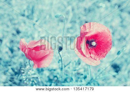 Retro stylized poppy flowers shallow depth of field.